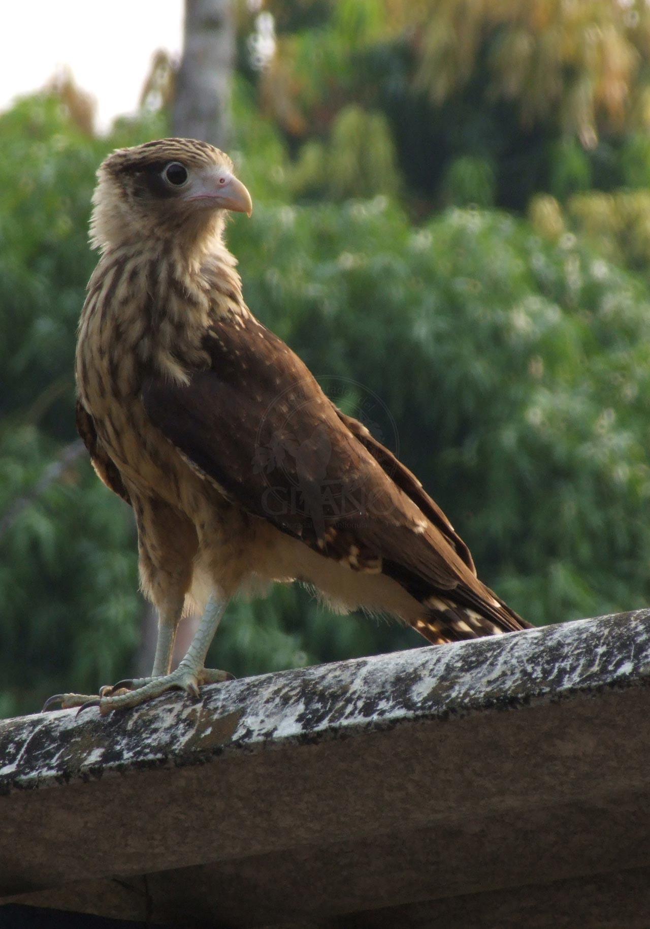 Contempla la grán variedad de aves Hotel & Restaurante Parador del Gitano