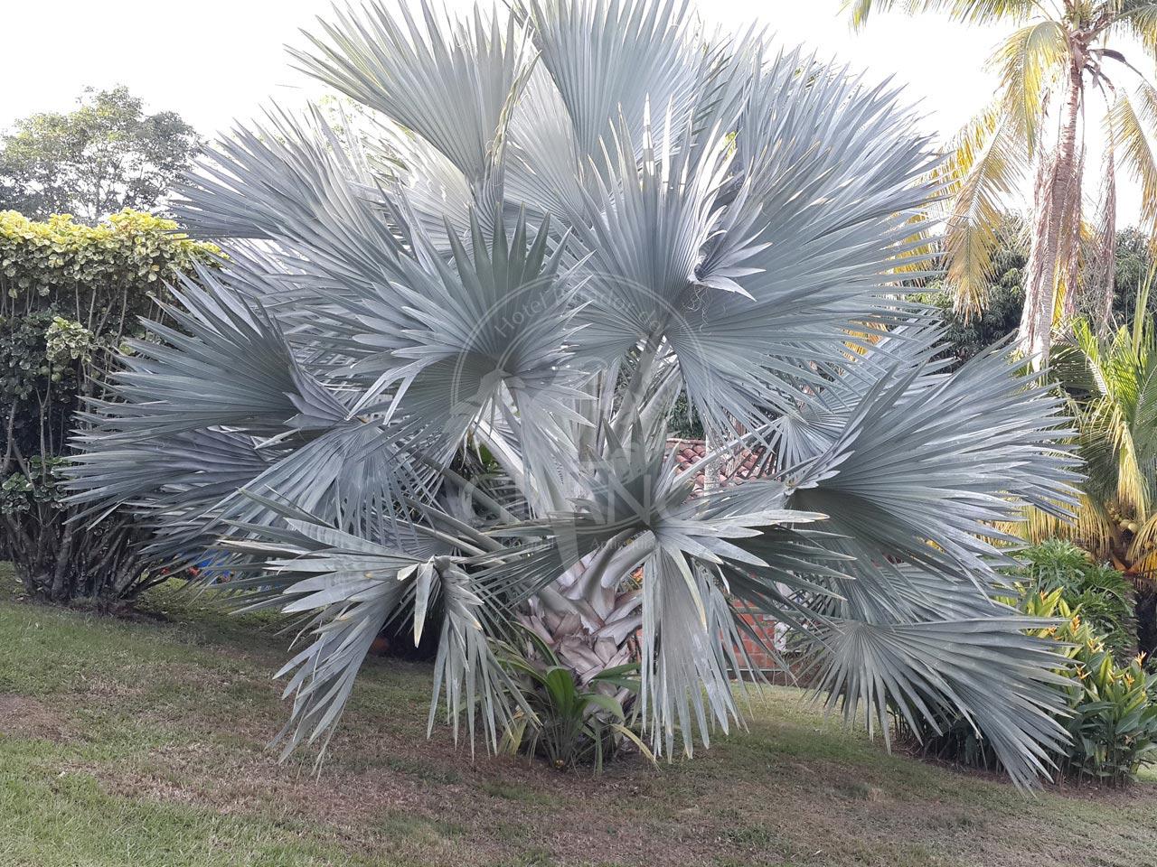 abundantes-jardines-y-sonidos-naturales-se-mezclan-con-la-brisa-y-envuelven-tus-sentidos-Hotel-Restaurante-Parador-del-Gitano-002