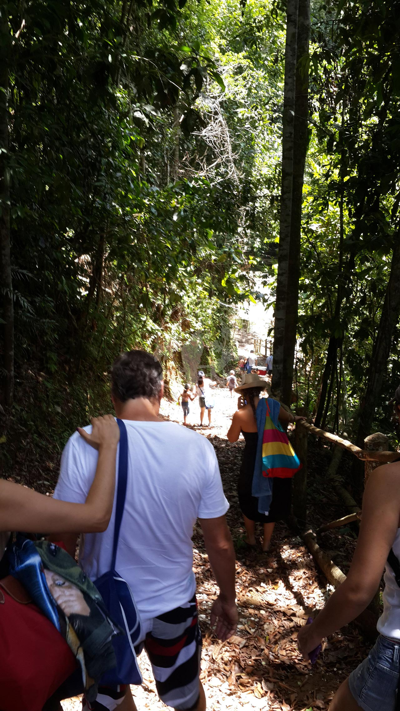 Expedición de bosques en familia - Hotel & Restaurante Parador del Gitano - Nápoles - Doradal - Rio claro