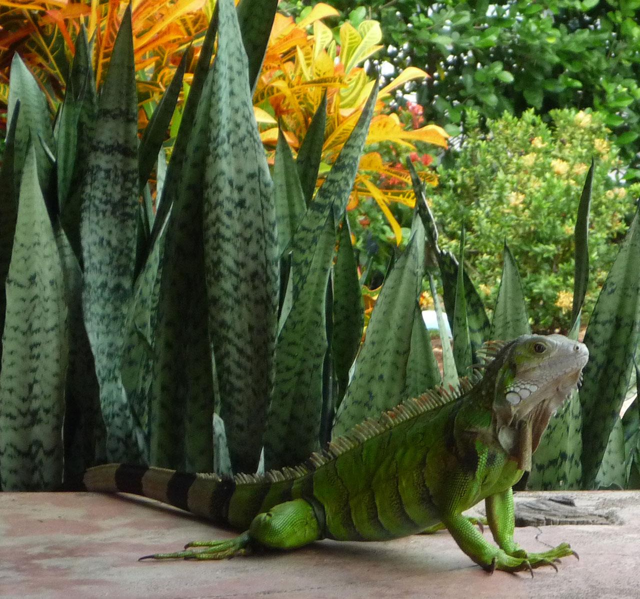 La flora y fauna se mezclan - Hotel & Restaurante Parador del gitano - Nápoles - Doradal - Rio claro