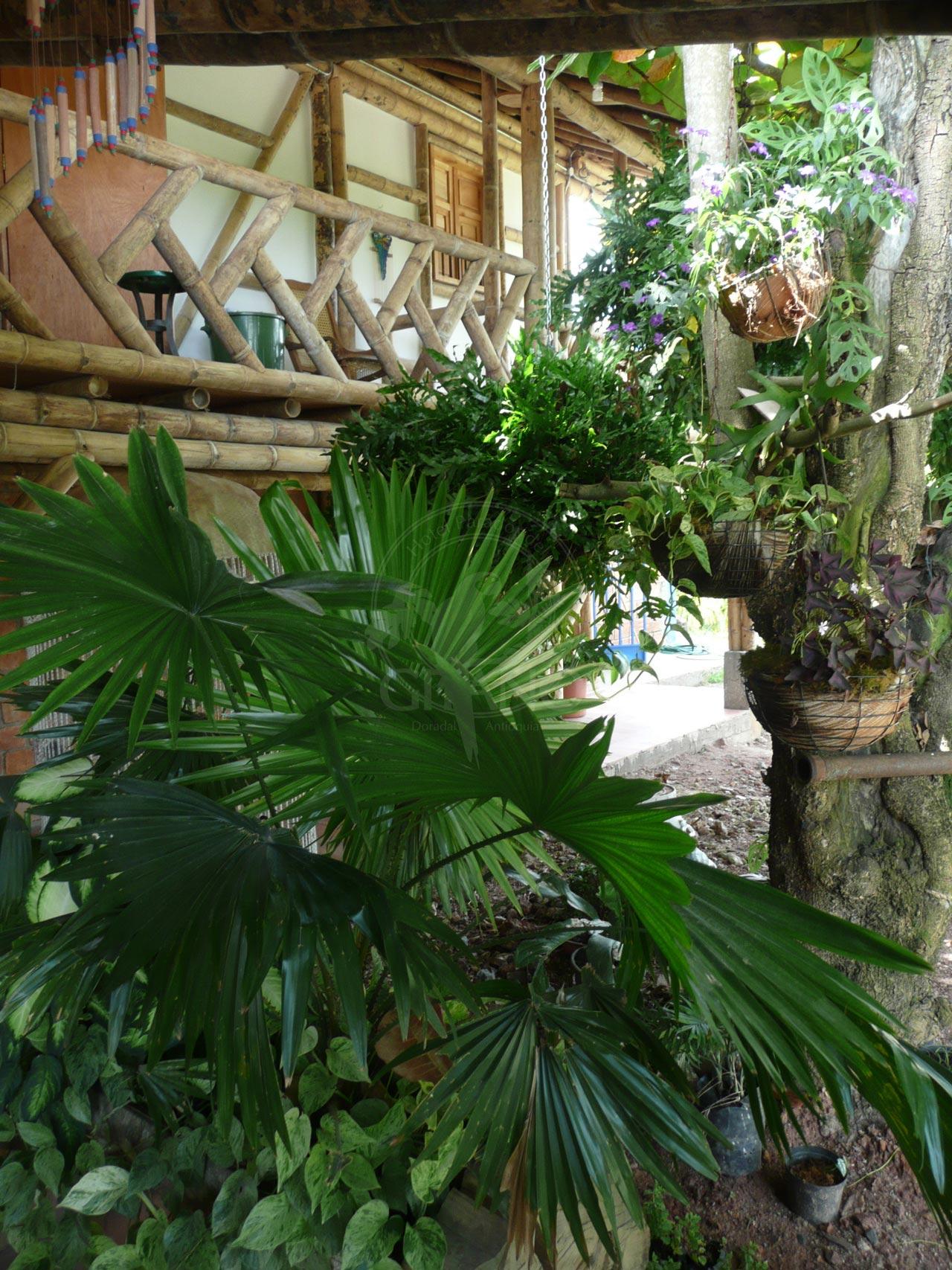 Un entorno natural - Hotel & Restaurante Parador del Gitano - Nápoles - Doradal - Rio claro