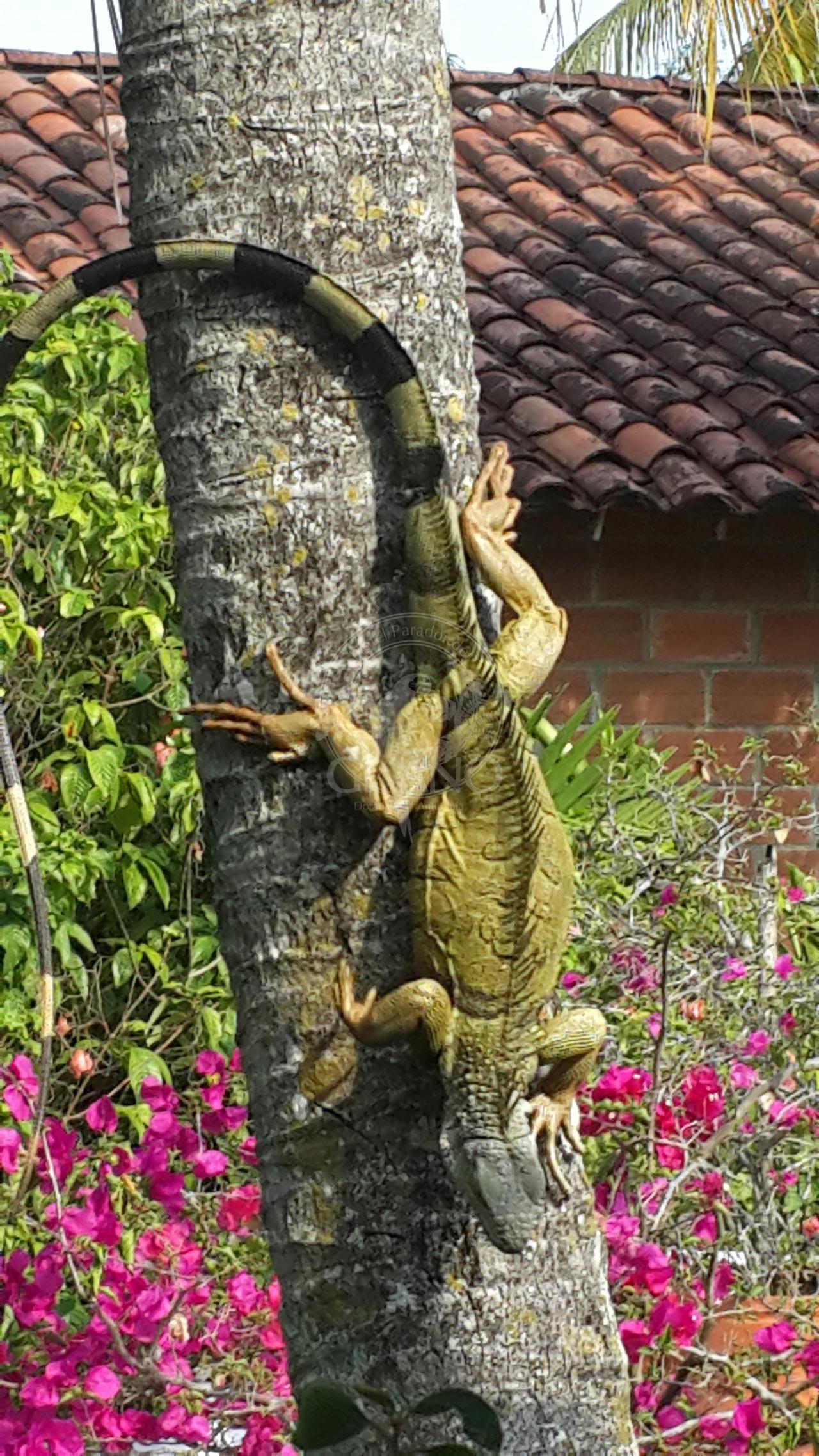 Fauna silvestre en su entorno natural - Hotel & Restaurante Parador del Gitano - Nápoles - Doradal - Rio claro