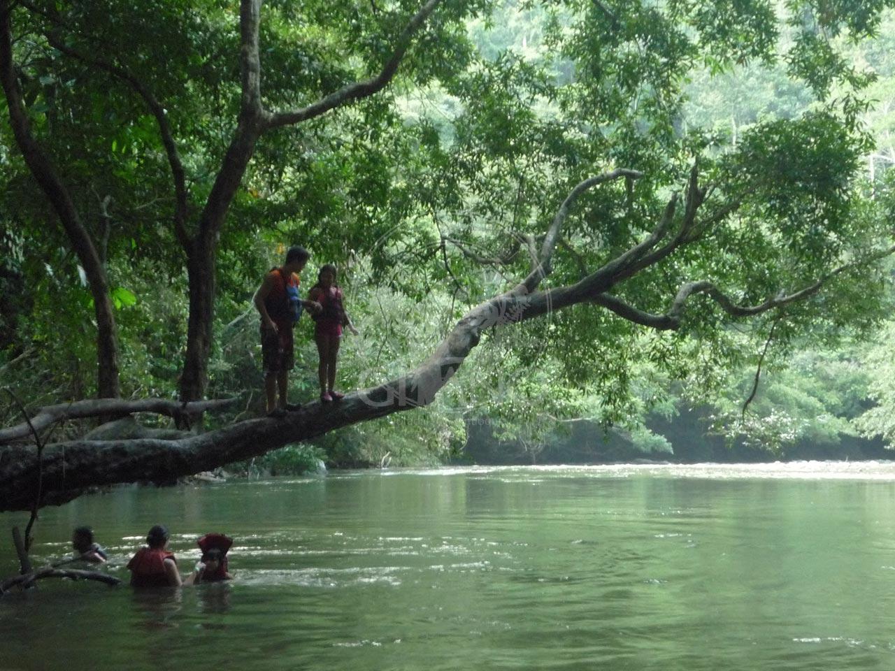 Los niños asumen retos - Salto desde un árbol - Hotel Restaurante Parador del Gitano - Nápoles - Doradal - Rio claro